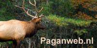 www.Paganweb.nl